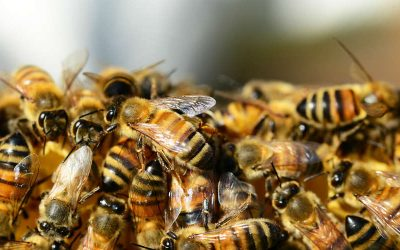 How to Keep Bees and Wasps Away in the Philippines