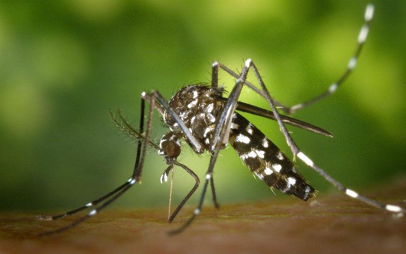 Dengue Symptoms Philippines