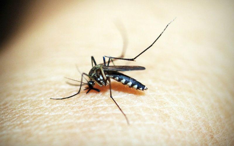 Mosquito Diseases Philippines